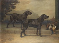 labrador retrievers: field trial champion peter of whitmore and champion type of whitmore by maud earl