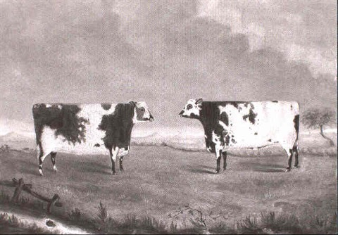 prize cattle in a landscape by john miles of northleach
