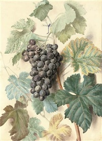 study of white sweetwater grapes (+ study of black prince or alicant grapes; pair) by james (sillet) sillett