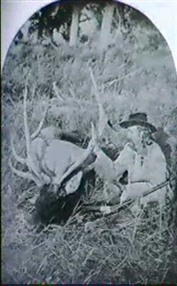 custer with a dead elk by william r. pywell