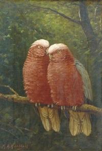 rose kakatoes: colourful friends by marinus adrianus koekkoek the younger
