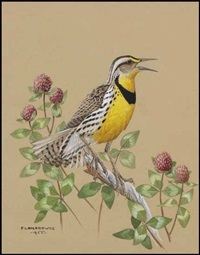 meadowlark by james fenwick lansdowne