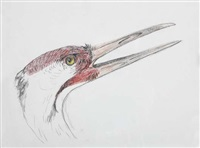 untitled (crane drawing) by walton ford