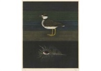 venus comb and plover by matazo kayama