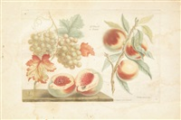 planches de fruits by roubillac