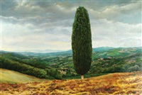 cypress tree in tuscany by yigal ozeri