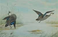 ducks in flight by neville henry peniston cayley