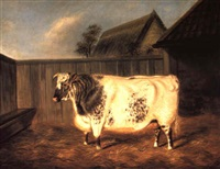 shorthorn bull in a yard by j. blazeby