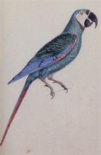 a parrot by heinrich gottlieb reichenbach