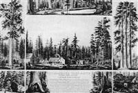 the mammoth tree grove, calaveras county, california by thomas almond ayres