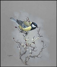 great tit by james fenwick lansdowne
