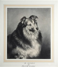 ch. eclipse (a sable and white rough collie) by frank paton
