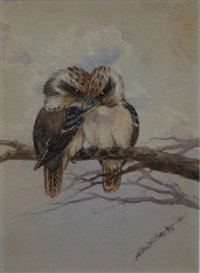 kookaburras by neville william cayley