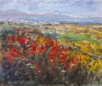 summer fields, donegal by robert d. bottom