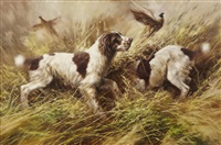springer spaniels and pheasants by mick cawston