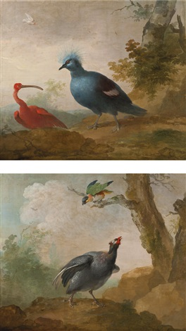 a helmeted guinea fowl and a black headed caïque on a branch and a red ibis and a victoria crowned pigeon pair by aert schouman