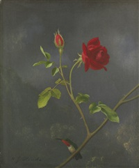 red rose with ruby throat by martin johnson heade