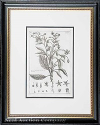 botanical engravings (group of 6) by pierre bouchoz