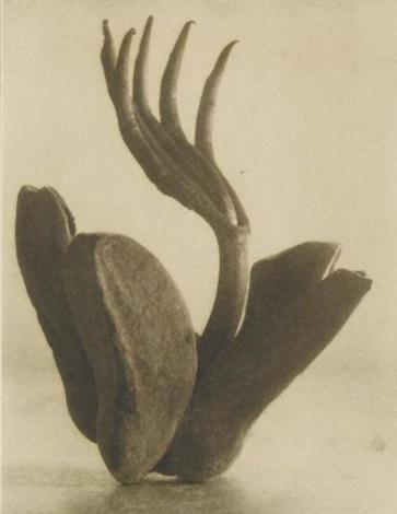 flor de manita by tina modotti