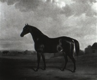 horse in a landscape with mares and foals by john barwick