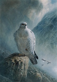 greenland gyr falcon and ptarmigan by peter allis