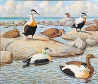 coastal scene with eiders by gerhard heilmann