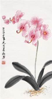 蝴蝶兰 by xiao shufang