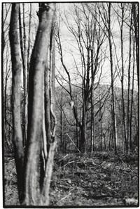 selected studies (4 works) by zoe leonard