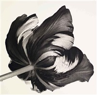 cottage tulip: sorbet, new york by irving penn