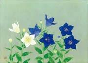 bellflower by kayo yamaguchi