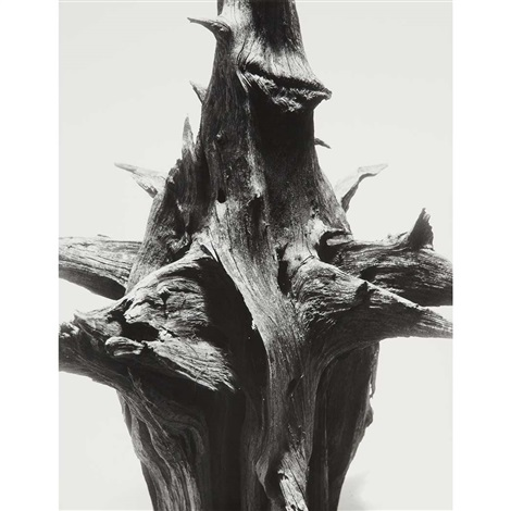 study of root by andreas feininger