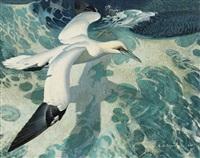 gannet in flight by keith shackleton