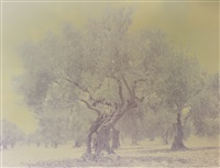 olive 3 (from the ghost series) by ori gersht