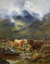 highland cattle watering at a stream, free roamers by douglas cameron