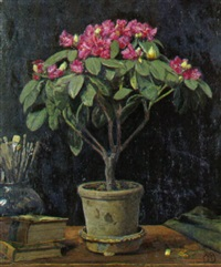 rhododendron i potte by frederick-georg andersen
