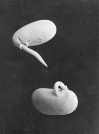 plantes (study; 2 works) by ernst fuhrmann