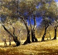 olivi a taranto by corradi