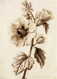 etude de fleur (study) by gérard van spaendonck