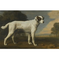 viscount gormanston's white dog by george stubbs