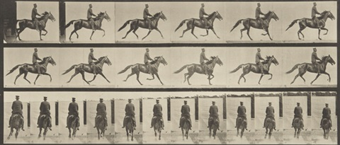 animal locomotion an electro photographic investigation of consecutive phases of animal movements 50 works by eadweard muybridge