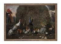 paons, ara sur la vasque d'une fontaine et oiseaux de basse-cour dans le jardin d'un palais romain avec statues à l'antique dont la flore farnèse by david de coninck