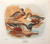 the natural history of the british surface-feeding ducks (bk w/65 works, 4to) by john guille millais