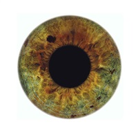 eyescape kate by rankin