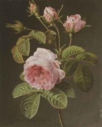 a sprig of pink cabbage roses by gérard van spaendonck