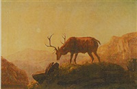 stag on a hillside at dusk by robert henry roe