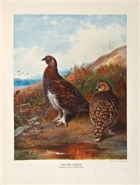 the natural history of british game birds (bk w/18 works, folio) by john guille millais