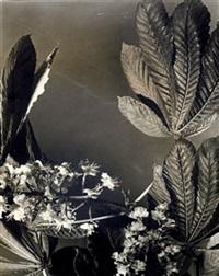 feuilles de marronnier by jean-marie auradon