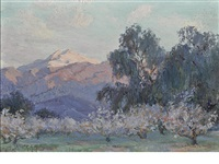 evening glow, mount san jacinto with flowering almond trees by anna althea hills