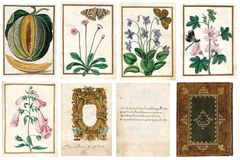 a highly important manuscript florilegium album of botanical works w81 leaves frontispiece first dbl sided wcartouche text 4to by jacques le moyne de morgues