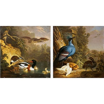 perdiz junto a un nido de paloma coronada victoria con sus crias avefría intimidando a unos patos pair by jan augustini